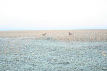 Deer_hunting_12022008b