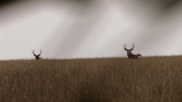 Deer_hunting_12092008A
