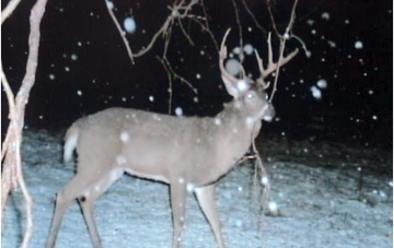 Late_season_deer_hunting_12182008b