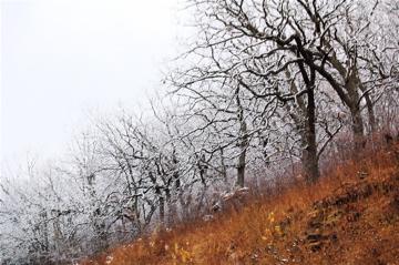 Deer_hunting_01152009A