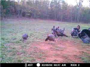 Turkey_hunting_0