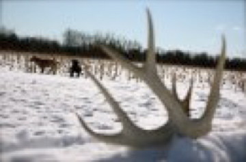 Shed_hunting_02242009A