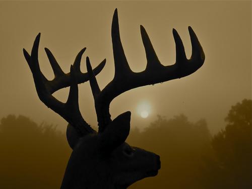 Buck_100209