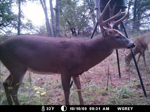 Moultrie Trail Camera Image