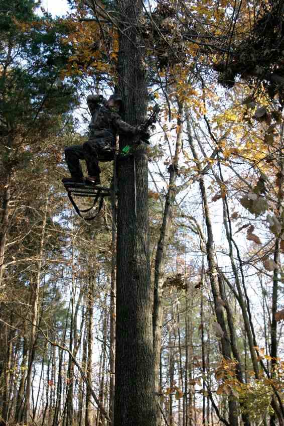 Tree Stand Fall