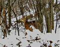 Deer-in-Winter