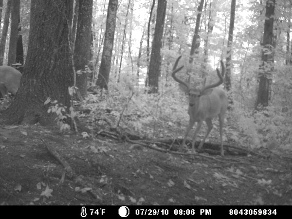 Cam-Deer
