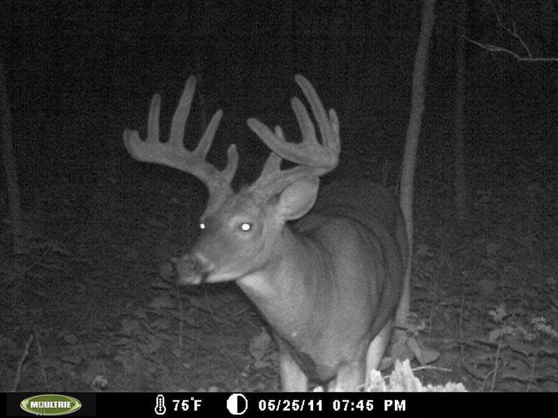Big-Buck