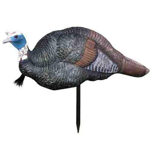 Jake turkey