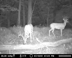 Photos captured by Moultrie's 2007 Game Spy Cameras