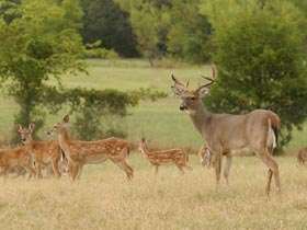 Deer Management During the Season