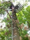 Treestand