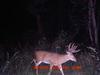 Deerpicture100207