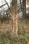 Deerhunting11152007a