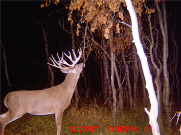 Scouting Camera picture of a Deer