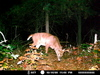 Trail Camera Picture
