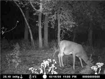 Game Camera Picture